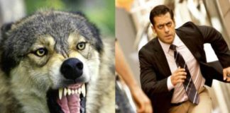 Dabangg Salman Khan is seen fighting with wolves in 'Tiger Jinda Hai'