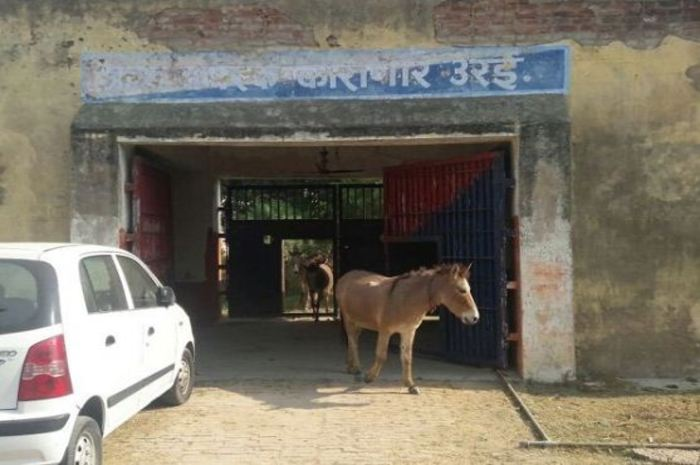 donkeys locked in jail