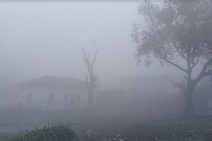 fogg in sheohar city