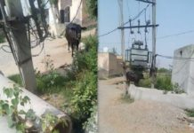 this TransFormer may be harmful for villagers